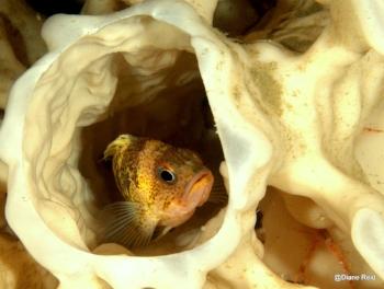 Sponge fish
