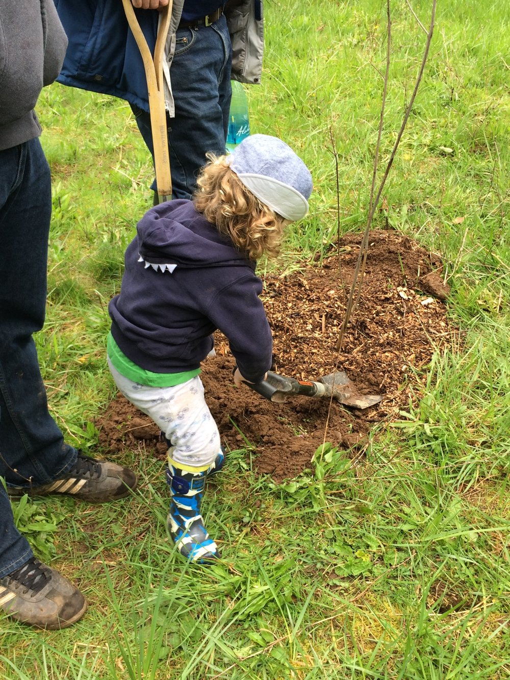 A young resident helps to plant a cascara tree donated by the Kim family.