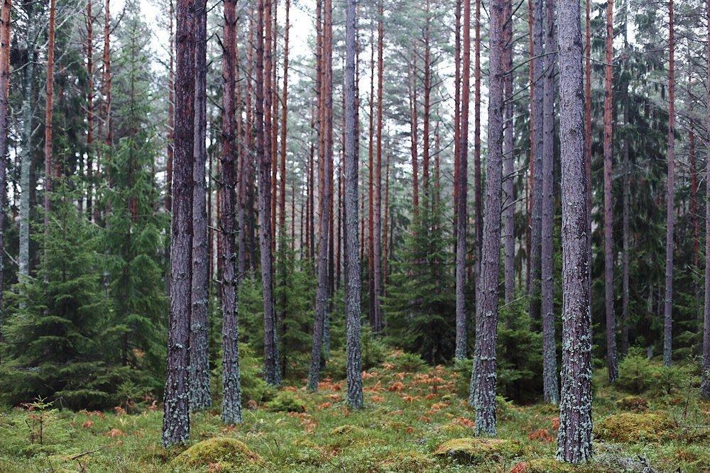 Jag ÄLSKAR att promenera i skogen. SÅ avkopplande. Denna dag var luften hög och fuktig. Det hade regnat hela förmiddagen så det var rejält blött.
