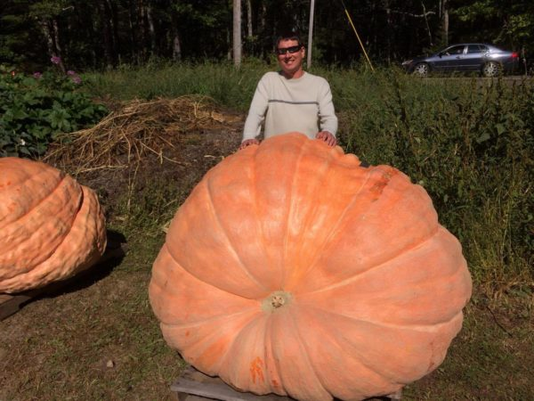 That's a big pumpkin.