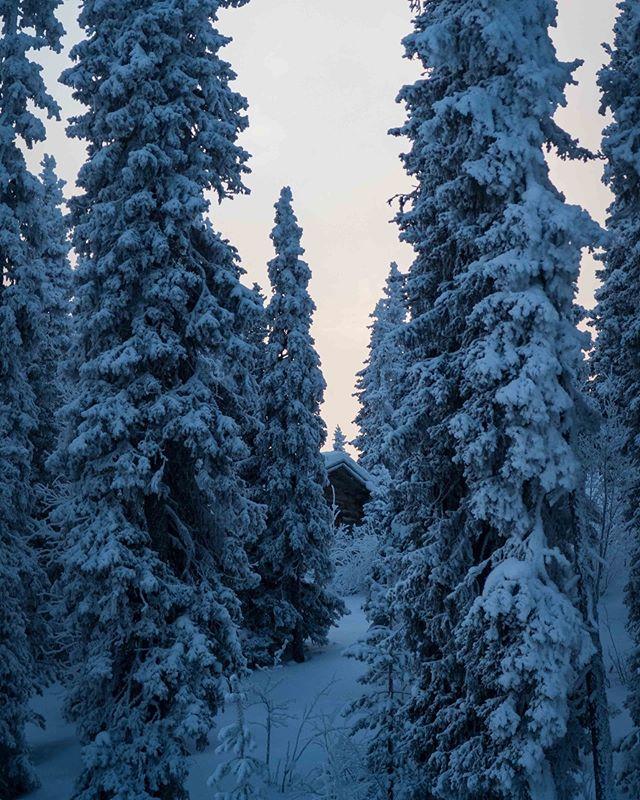 Lapland Morning  #kontikireisen @kontikireisen  #reisenstattferien @globetrotter_schweiz  #flyedelweiss  #visitlapland @visitlapland  #visitfinland @ourfinland  #arcticluosto @visitluosto #bodylpics