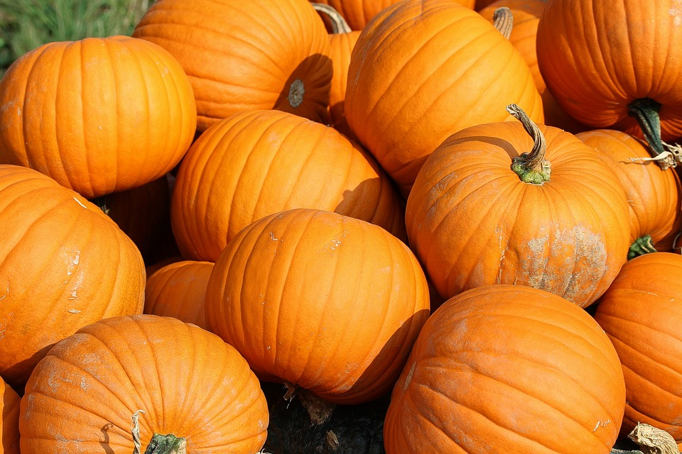 $5 Pumpkin Cannon - Try your aim with a bucket of pumpkins for just $5!