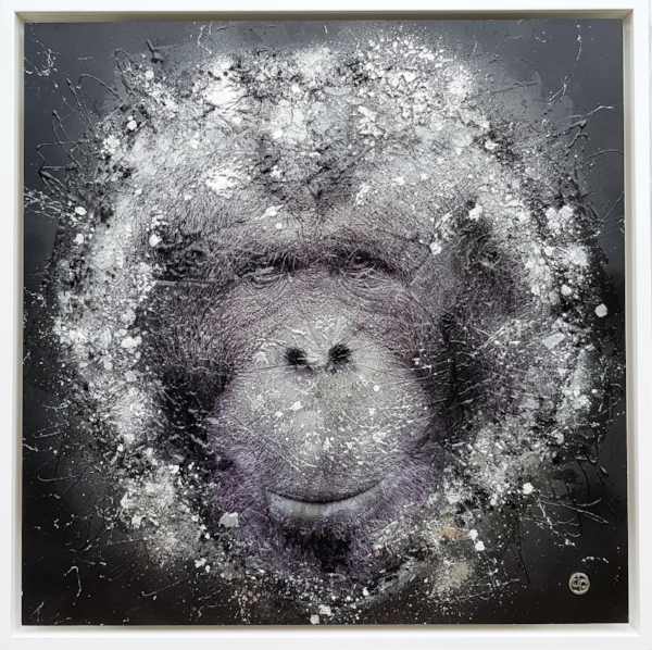 The Bornean Orangutan.jpg