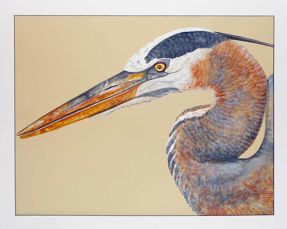 """Portrait of the Blue Heron""  Watercolor on Paper  35"" x 41"""