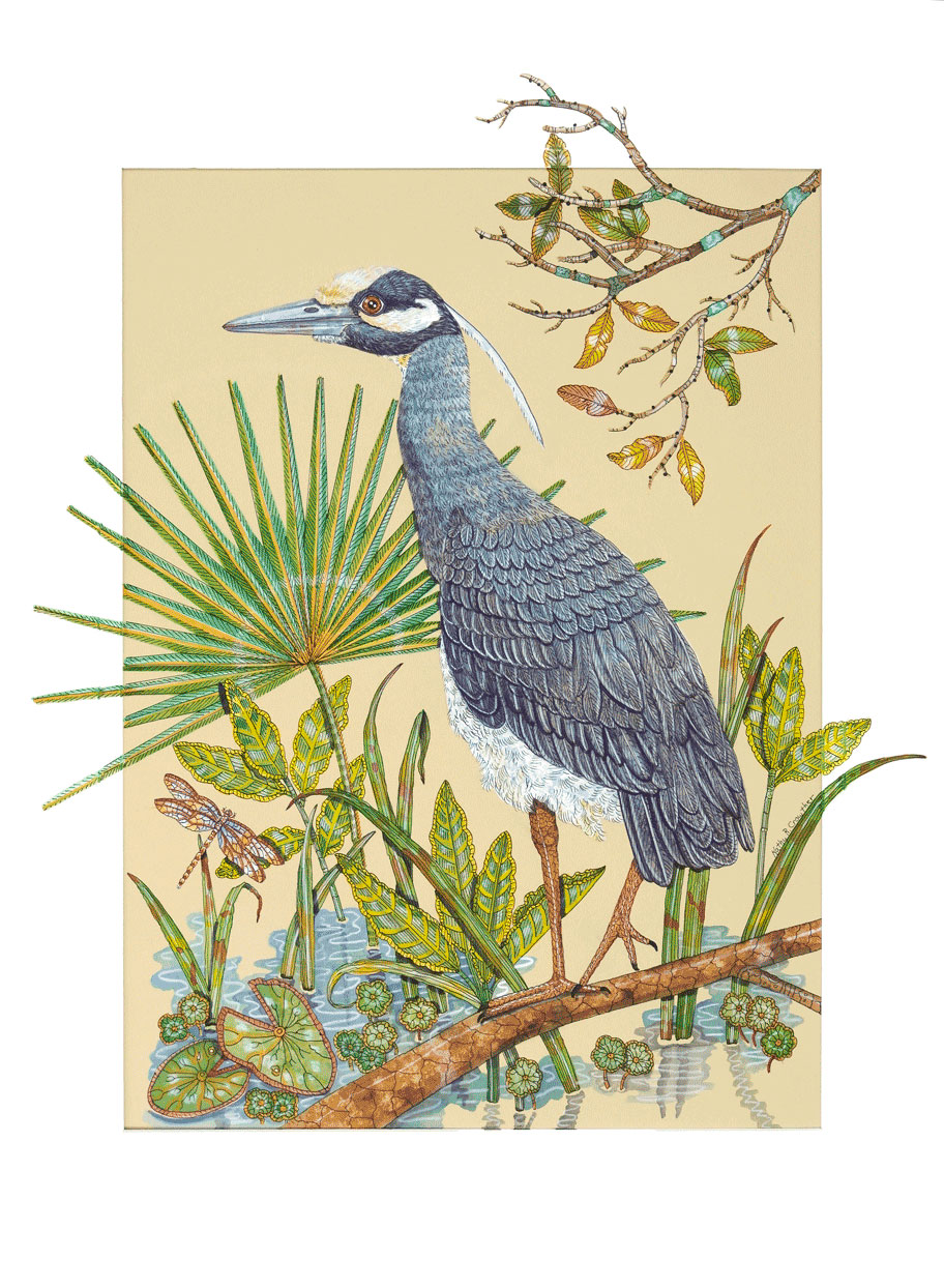 """Yellow Crowned Night Heron""  Watercolor on Paper  32"" x 25"""