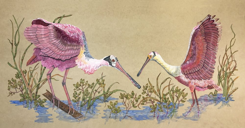 """Roseate Spoonbills""  Watercolor on Paper  24"" x 36"""
