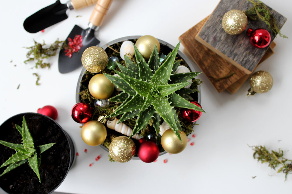 Give your loved ones an experience this holiday! Send them a Ribitt gift-card to  Tiny Greens  (Peterborough) so they can build their own custom terrarium.