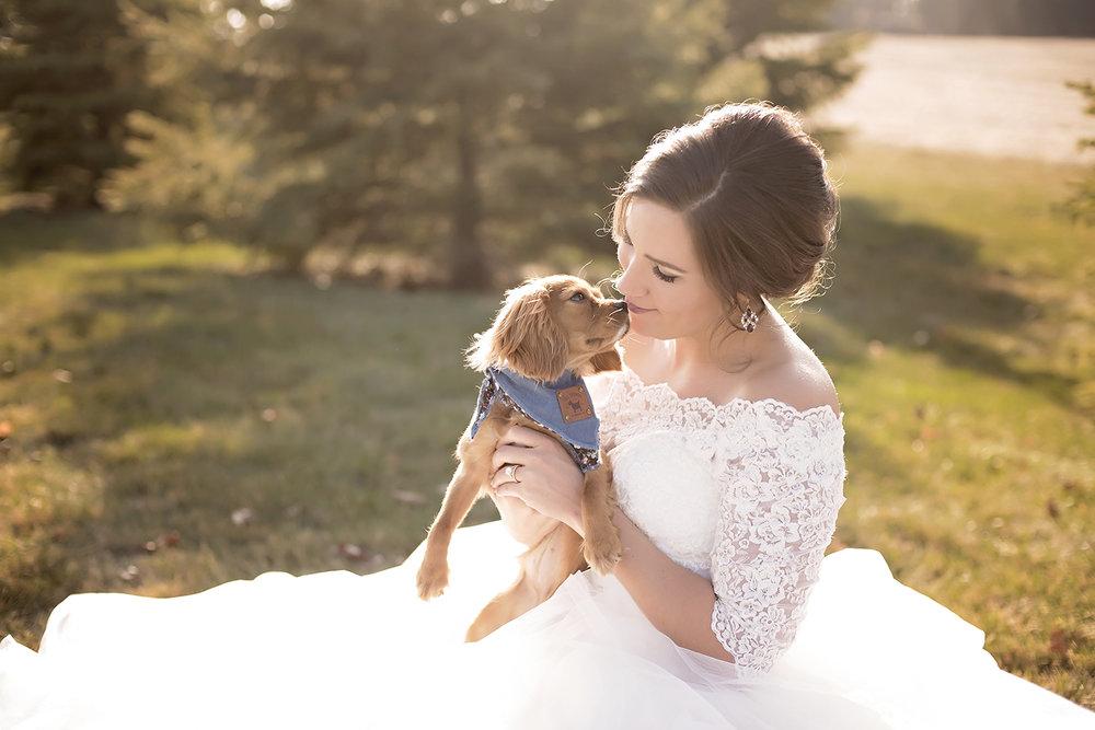 bride cuddles her cavalier king charles spaniel