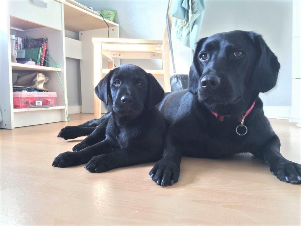 Puppy and mummy (2).jpg