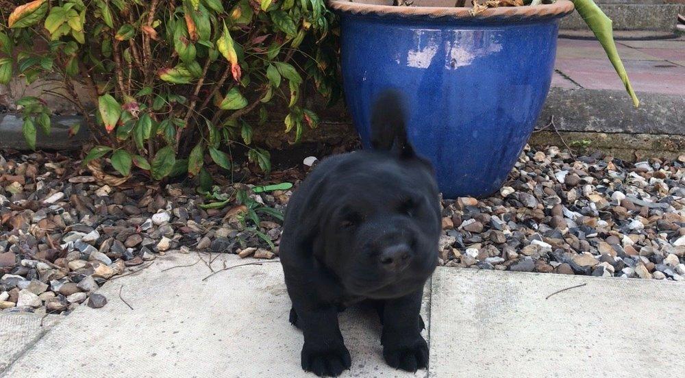 Puppy Week 4!   Max