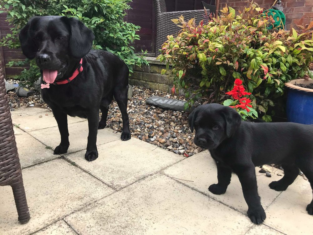 Abi's Blog | Puppies! Max & Mia