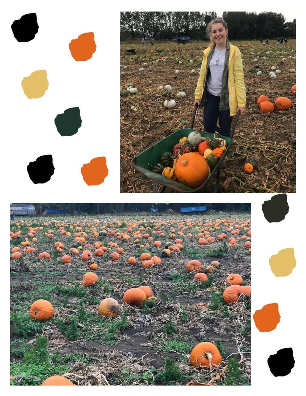 Pumpkin patch & wheelbarrow.png