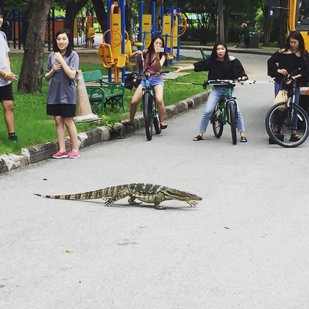 Monitor dragon crossing the bike path at Lumpini Park.