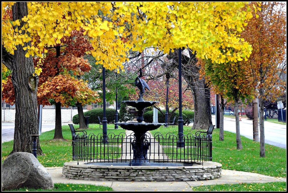 Autumn Ginko - Howard Park.jpg