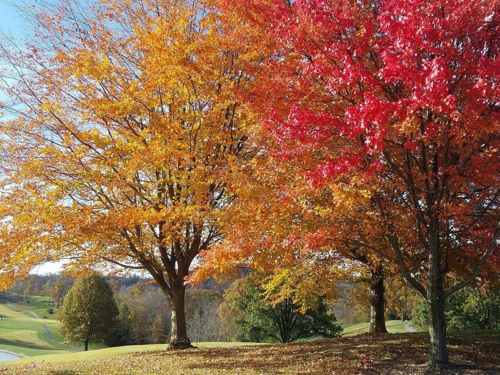 Devou Park Fall Morning.jpg