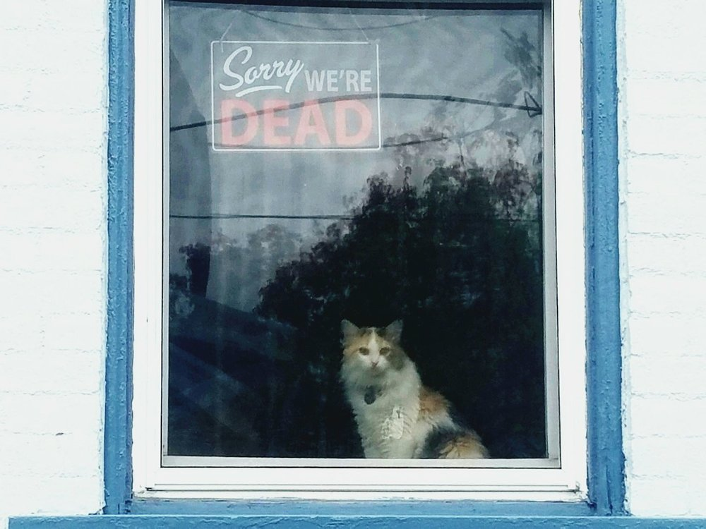 Lewisburg Historic District - Window Frame.jpg