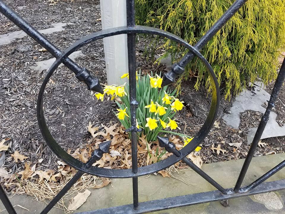 Spring Focus.jpg