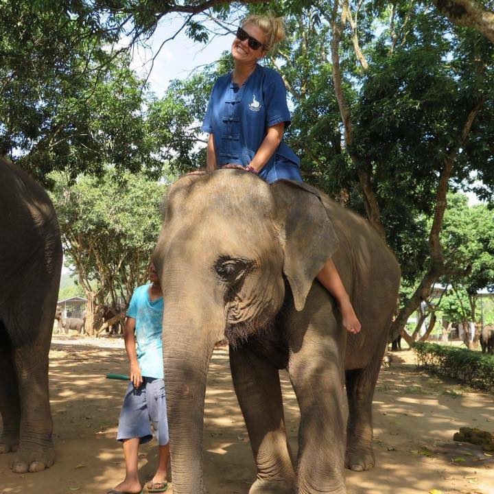 Make sure to visit the Elephant sanctuary while in Chiang Mai, Thailand. These are rescued Elephants and they are very well taken care of.