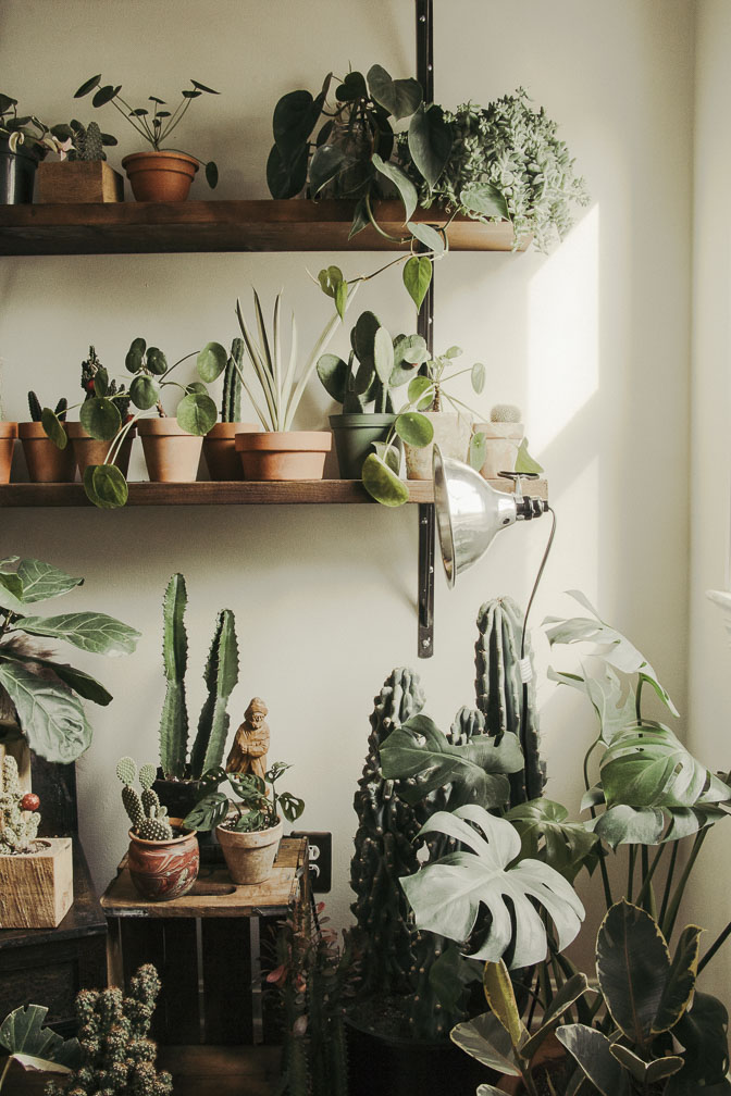 WHERE TO FIND HOUSE PLANTS?! - Shawn and I love to shop at;lakewood plant companystumppistils nursery