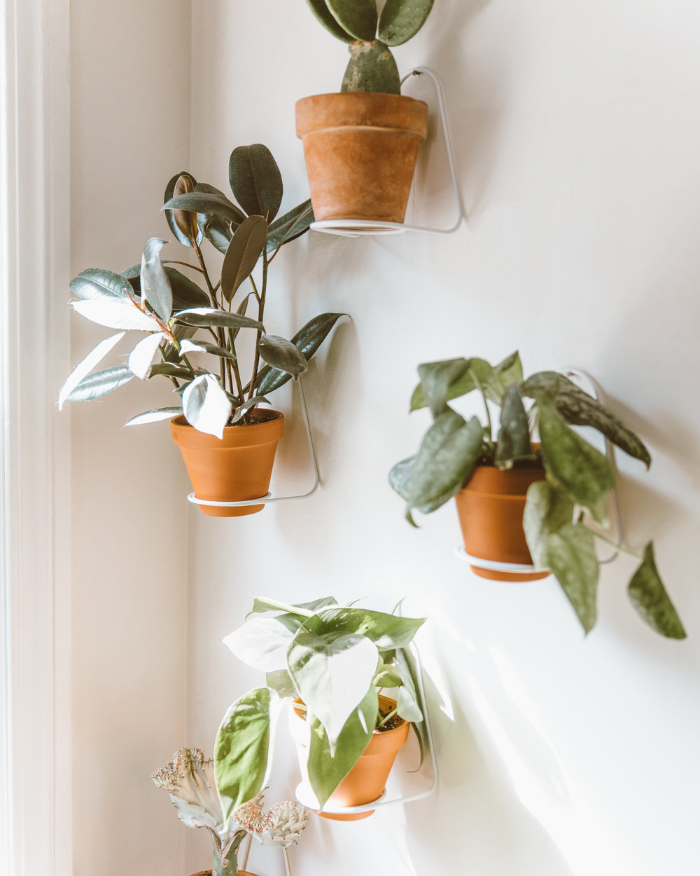 _forthehome-how-to-living-wall-01.jpg