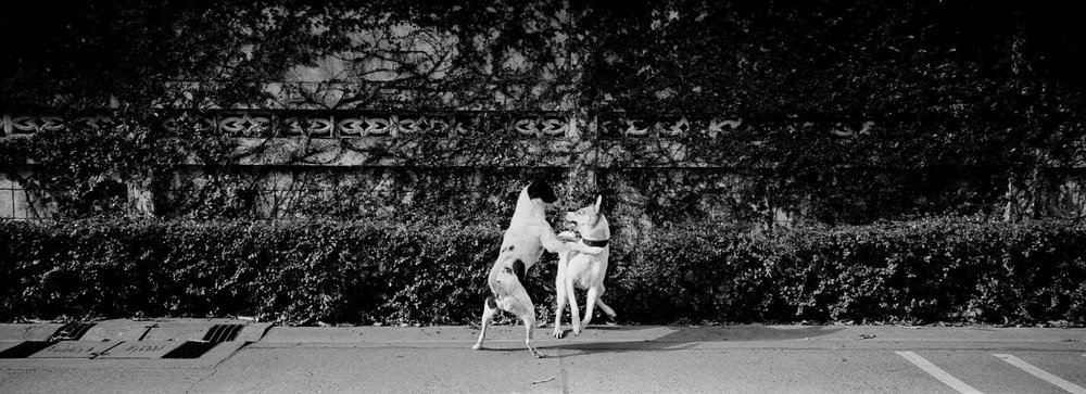 """Dogfight""Bangkok, Thailand."