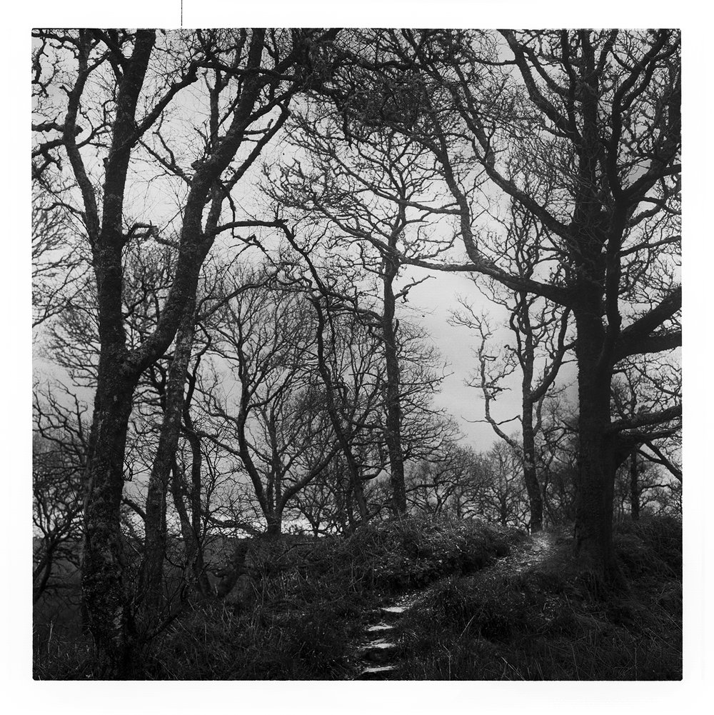 'Winter Trees' Tayvallich, Argyll & Bute.