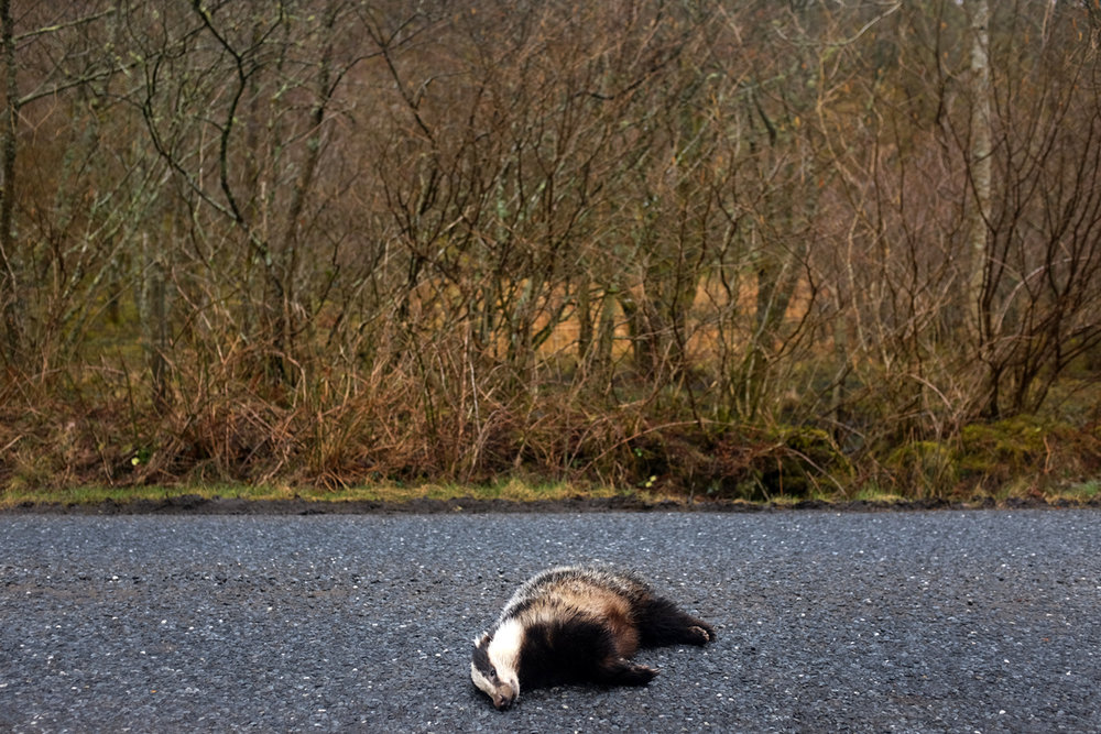 #1 Roadkill, Tayvallich.Argyll & Bute.