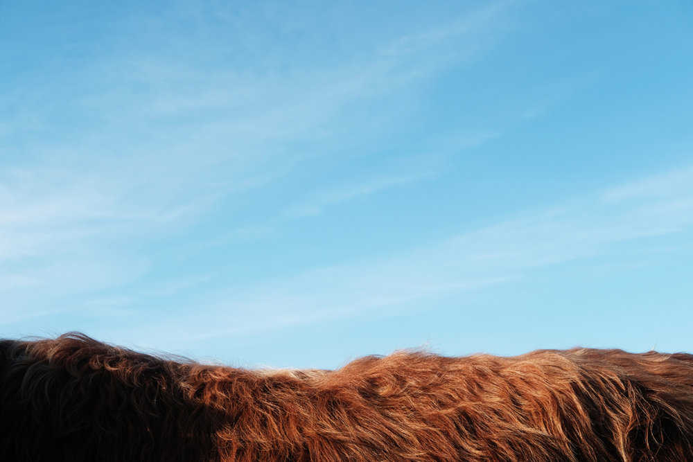 Bull's back # 1 Tayvallich, Scotland.