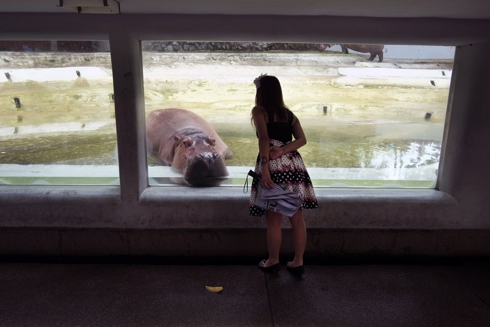 Zoo. Bangkok, 2012
