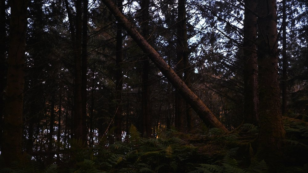 JackPicone_Trees-Tayvallich-Web-2.jpg