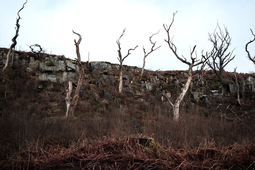 Trees, Argyll and Bute, Lochgilphead.