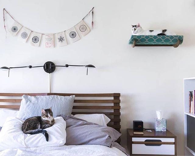 お洒落な壁のキャットウォークは最適な昼寝スポットにもなるのが一石二鳥ですね! 📸: @meow.haus . . . . . #catchjapan #キャッチ #猫生活 #猫がいる生活 #ねこと暮らす家 #猫と暮らす #インテリア #猫インテリア #interiorstyling #lifestyle #リビング #猫暮らし #空き家再生 #リフォーム #空間デザイン #お家 #部屋作り #roomsforinspo #catwalk #catbed #キャットウォーク #キャットベッド #interiorinspo