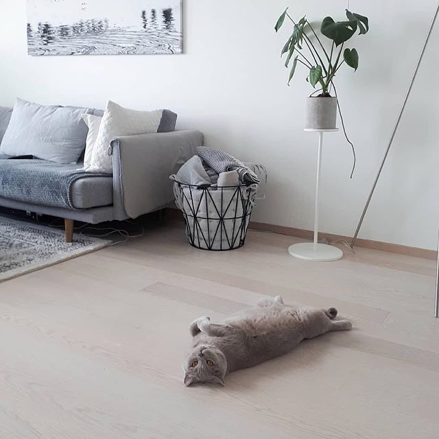 週末のくつろぎ。 Sunday chill out. . 📸: @morrisonharrison Happy Sunday Funday!❤ Hooman, I'm waiting my belly rub! 😽😸😹 . . 📷Harrison . . #catchjapan #キャッチジャパン #インテリア #インテリア雑貨 #interiorinspo  #sunday #catinterior #weekendfluff  #worldofcats #cat_features #cat #catloversworld #catlover #ilovemycat #catsofinstagram #catasticworld