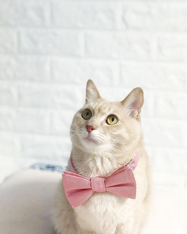 皆様ご無沙汰しております。キャッチの猫部長白玉です!今年の夏が特に暑くてよく水を飲んで、氷をなめなめしています! 夏のキャッチは秋と冬の猫リフォーム案件の企画や整理をし始める時期とも言えます。秋と冬の猫リフォームについて、ウェブサイトまで気軽にお問合せください! 待ってますにゃん🐾 . . . . #catchjapan #キャッチ #猫生活 #猫がいる生活 #ねこと暮らす家 #猫と暮らす #インテリア #猫インテリア #interiorstyling #lifestyle #リビング #猫暮らし #空き家再生 #リフォーム #空間デザイン #お家 #部屋作り #roomsforinspo #neko #猫 #猫生活 #猫の日 #猫ちゃん #猫リフォーム