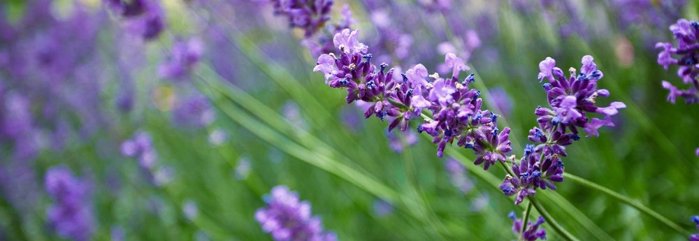 ScentmAIL - Success smells sweeter with