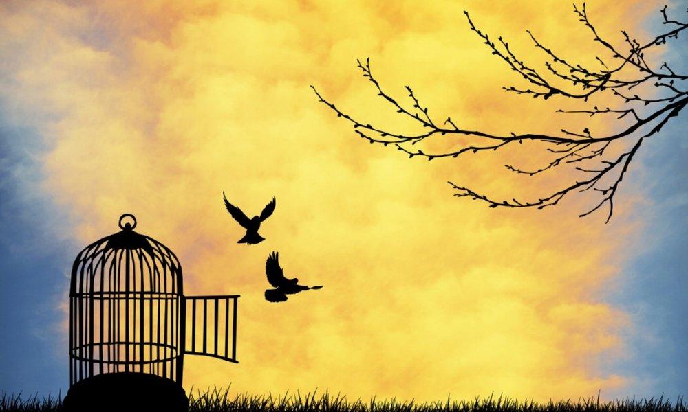 Birds cage photo.jpg