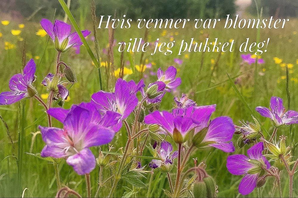 Hvis venner var blomster.._.jpg