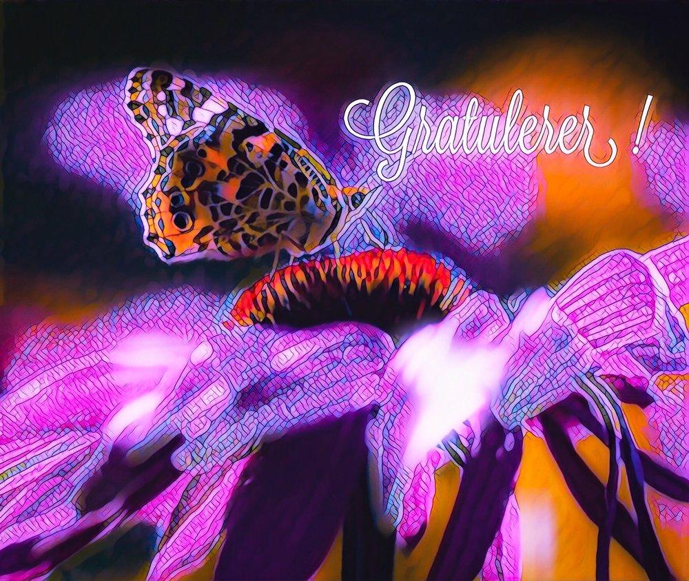 Sommerfugl og blomst.jpg