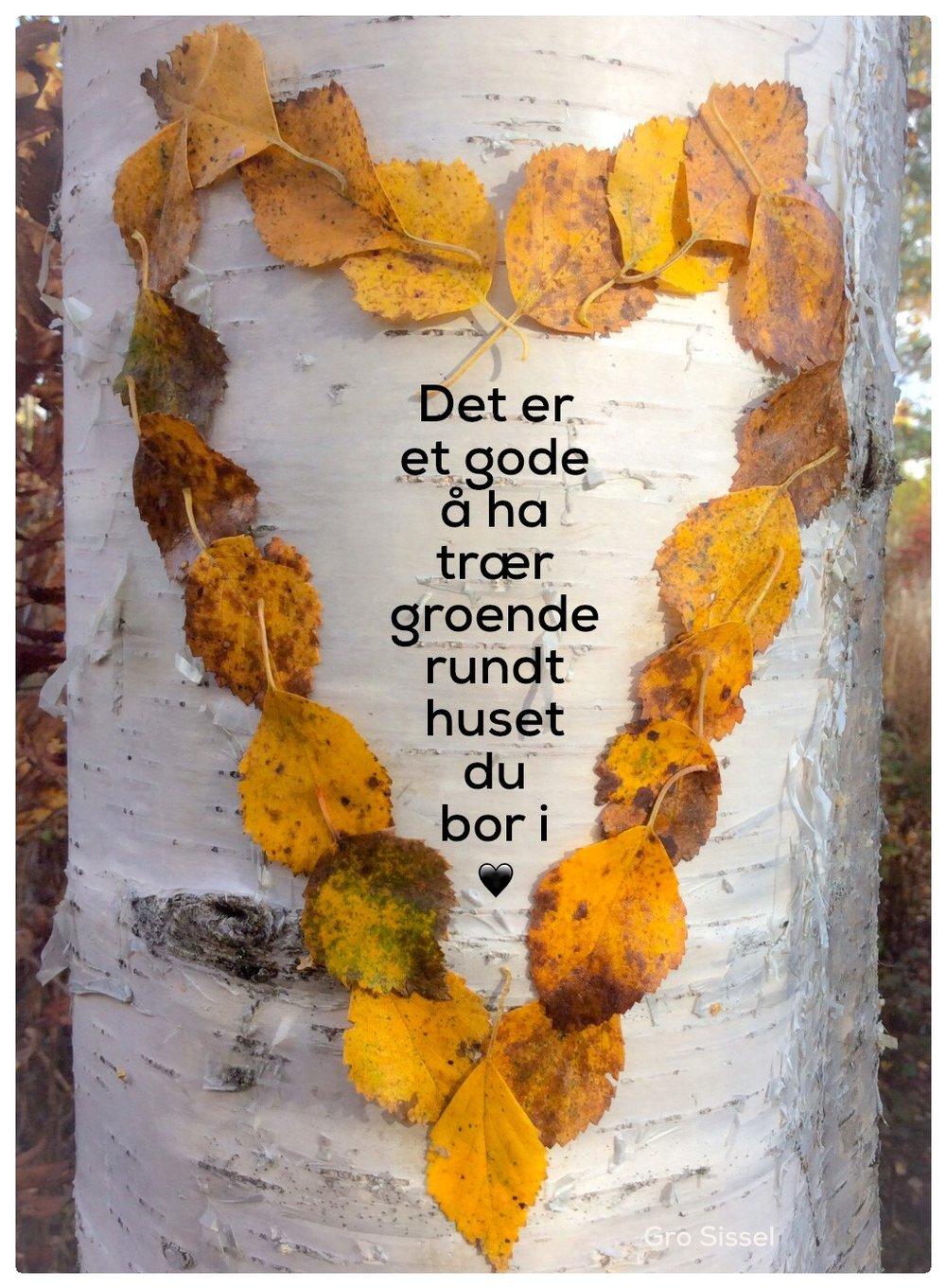 Å ha trær.._.jpg