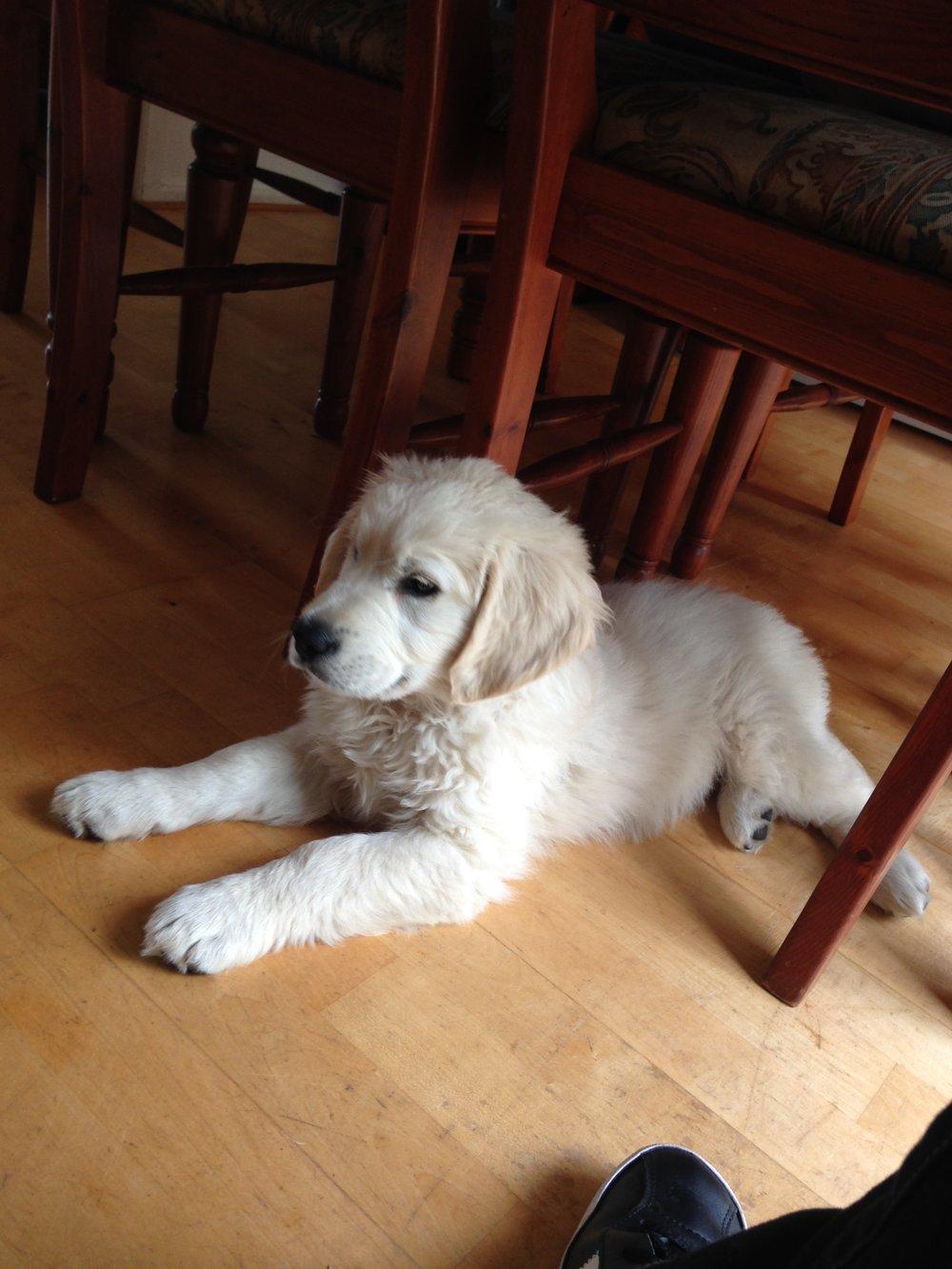 waddington puppy.JPG