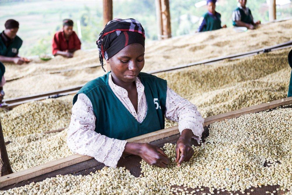 Kamegeri Sector, Nyamagabe District, Rwanda - Buf Nyarusiza