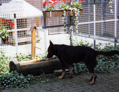 Erfrischung für durstige Hunde