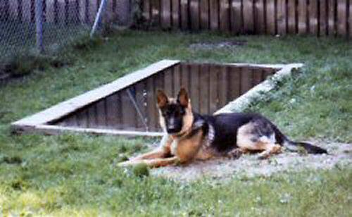der Hunde-Pool für heiße Tage