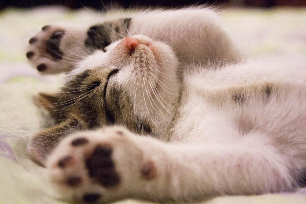 animal-cat-face-close-up-416160 (1).jpg