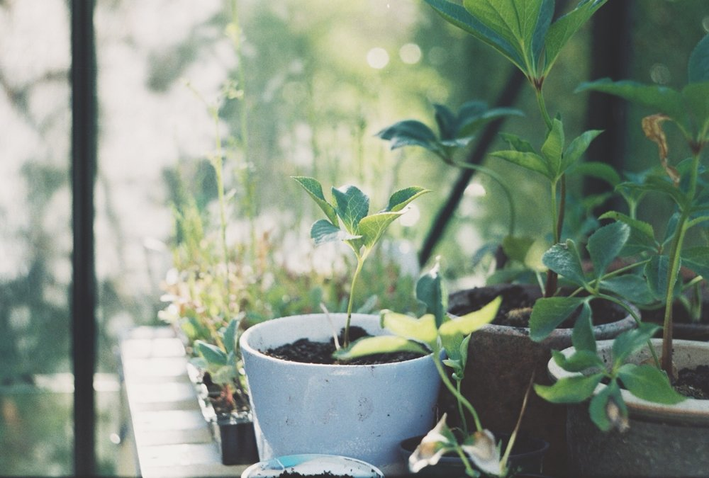 The Growth // Greenhouse Diaries #2 | The Foraged Life