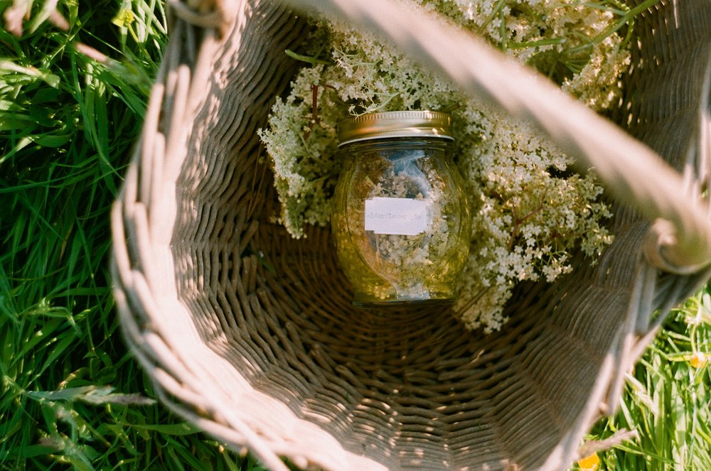 Foraged Elderflower Gin | Recipes by The Foraged Life