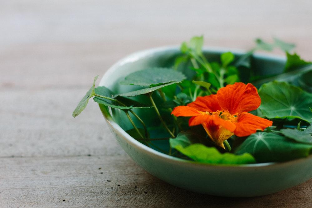 Foraged Wild Garden Salad