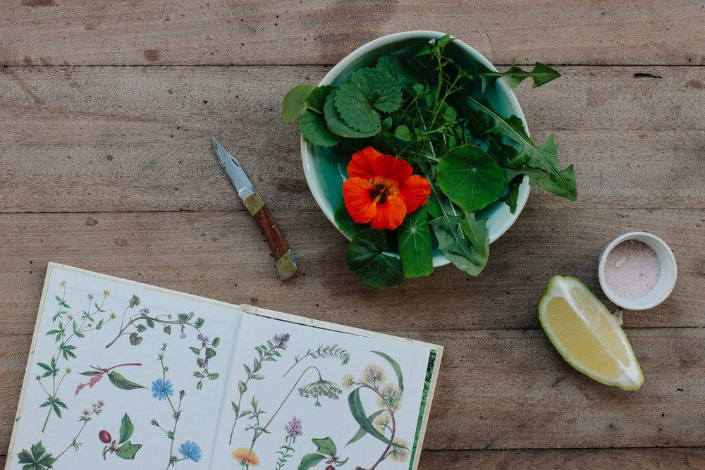 Foraged wild garden salad and herb book