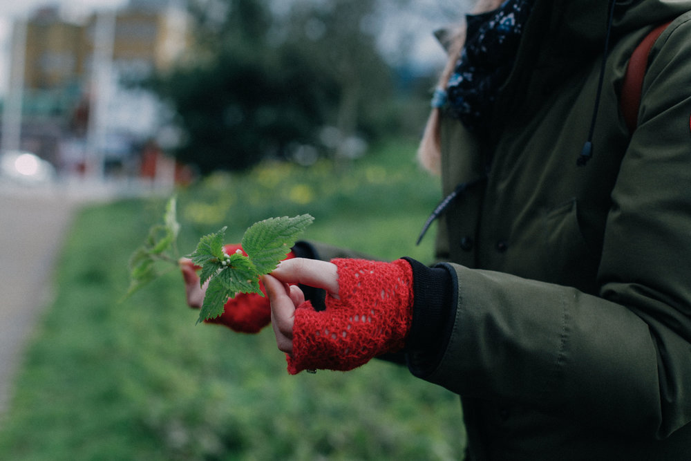 A Guide to Foraging // What it is & How to do it | The Foraged Life