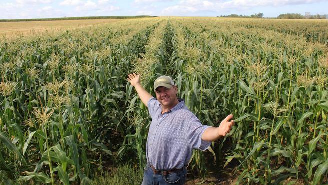 BMS-Lite / For Soil Remediation
